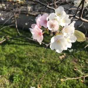 春が来た‼️