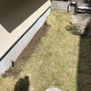 雨水菜園2021 始める前に庭の手入れを