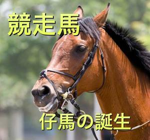 【競馬】競走馬の仔馬の誕生まで