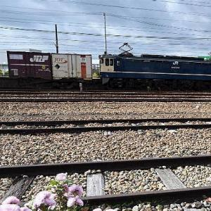 11/28 SAT. JR貨物 EF65 電気機関車です。