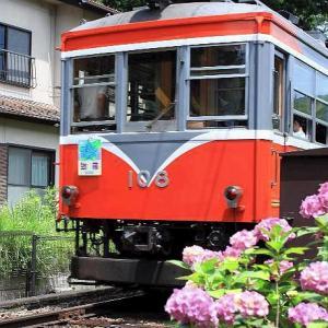 箱根登山鉄道と紫陽花、その4です。