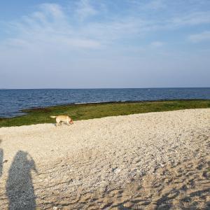 清明祭とお気に入りのビーチのお話