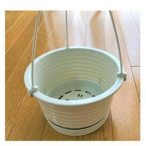 【アクアリウム】砂利に直植えした姫スイレンを鉢に移すぞ!