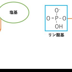 DNA・RNA ~構造の違い~