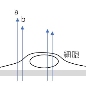 顕微鏡シリーズ~微分干渉顕微鏡(DIC)~
