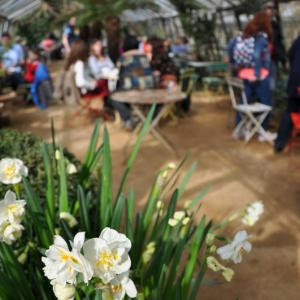 緑に囲まれたお洒落なカフェ! ピーターシャム・ナーサリーズ Petersham Nurseries