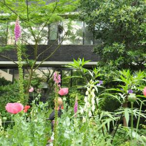17世紀から続く知る人ぞ知る植物園! チェルシー薬草園 Chelsea Physic Garden