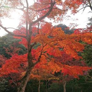 宮島の紅葉