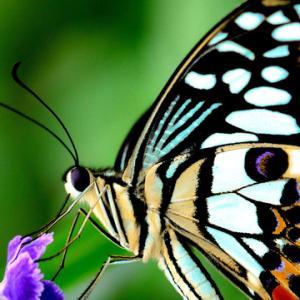 ぷにぷに!アゲハ蝶の幼虫を発見