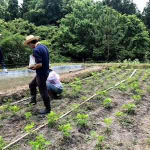 無肥料栽培・畑セミナー6月
