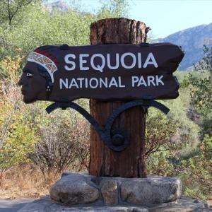 子連れカリフォルニア周遊旅行記②|セコイア・キングスキャニオン国立公園の見どころ