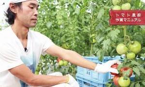 農作業マニュアル トマト