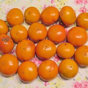 美味しい柿が採れました