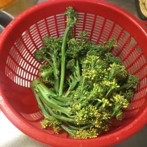 野菜作り🔰マーク 途中経過