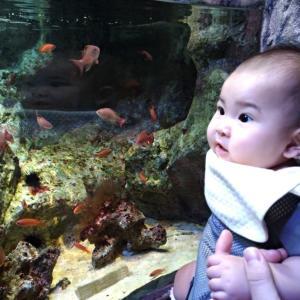 お魚大好きー