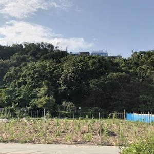 沖縄 南城市の稲作発祥の地と伝えられる受水走水