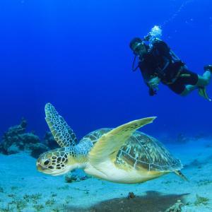 沖縄の海に魅了されたらダイビングライセンスを取得しよう