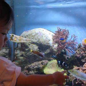 板橋区立熱帯環境植物館 ☆ 区営なのに魚の種類が150種ある水族館