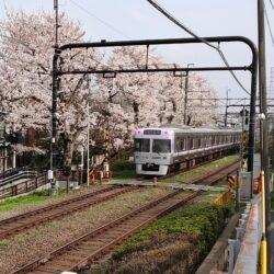 カラフルな電車と桜並木が見られる【京王井の頭線】おすすめビュースポット