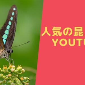 虫好き必見!人気の昆虫YouTuber 5選