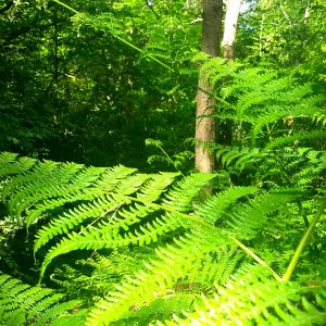 森林浴して、未来を思う。