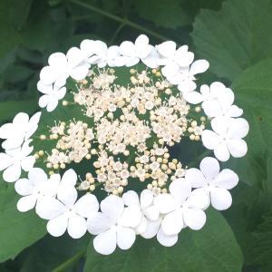 この花なんの花?