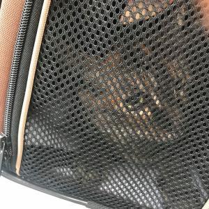 猫の病院へ行ったので、その記録