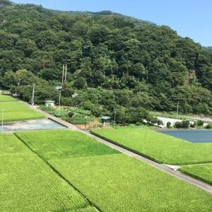 【神奈川⇆静岡 】自転車で走る 御殿場ルートの魅力を紹介。「山・川・森の景色が良くて」おすすめです