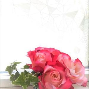 薔薇の力でこころをほぐす