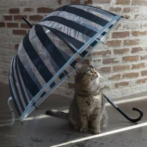 雨の土曜日。