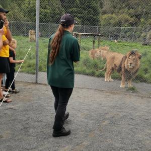 NZのライオン