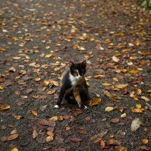秋色道の真ん中