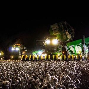 【これ何をしている写真に見える?】綿花の収穫写真が話題