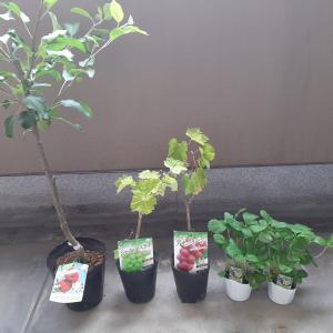 ペットポトルを再利用した再生栽培&もはやただの家庭菜園!!笑