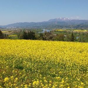 新潟在住の著者が220キロメートル離れてても毎月訪れる飯山市の魅力を発信したい!