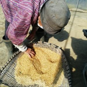 お米はどうやって作られる?おいしいお米の第一歩!稲の種まき
