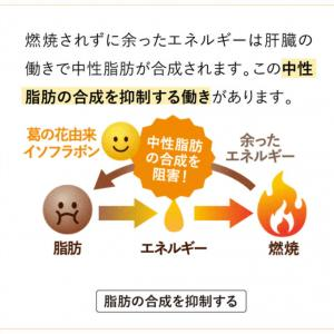 ENERGY SLIMエナジースリム-中性脂肪の合成を抑制