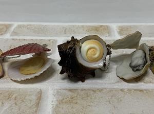 貝殻を開くと....ぷにゅぷにゅ〜 やわらか〜い!