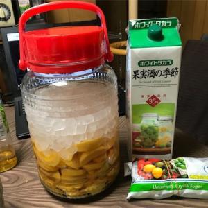 チェリー酒完成&柿酒の作成