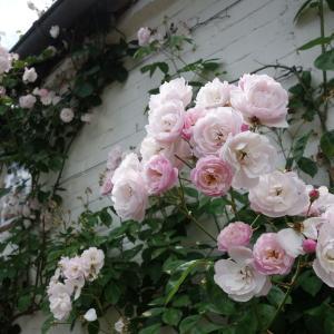 フランス「薔薇の村」ジェルブロワが今も心に残るディスティネーションだった理由☆ピクニックランチが旅にあるといい!