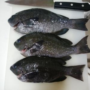 魚料理♪ グレを美味しく頂く