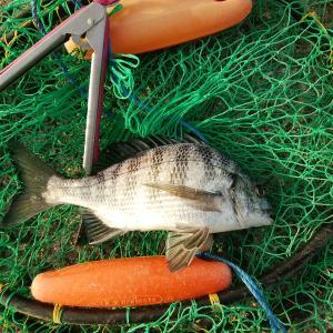 楽しい釣り♪ 2020秋第拾壱回目の紀州釣り