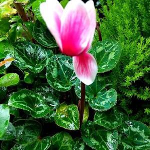 梅雨の花達