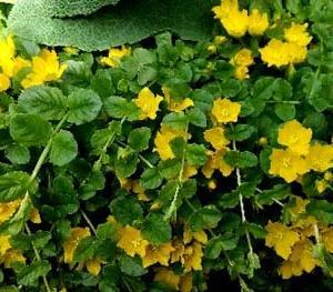 初夏の花色々