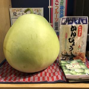 栃木の魅力まるごと「とちまるショップ」かんぴょうの原料って?