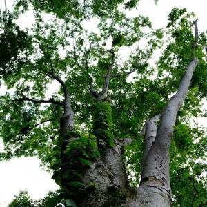 雑木林の1枚