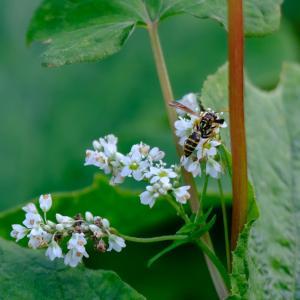 ハチと小花