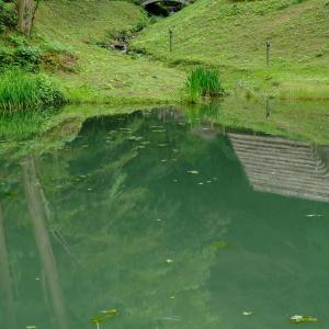 ため池での景色