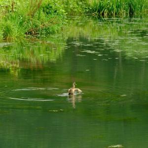 ため池での景色 2