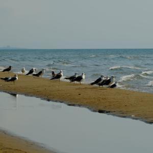 海での景色